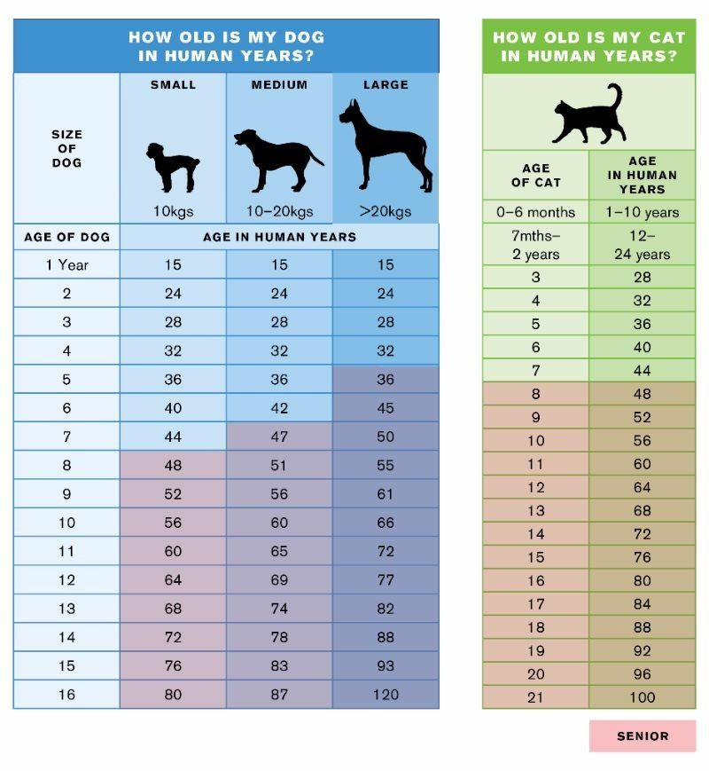 Pin By Drienie O Connell On Copacabana Pet Cat Ages Dog Ages