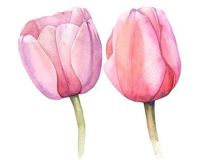 Watercolor Tulips In 2020 Watercolor Portrait Painting