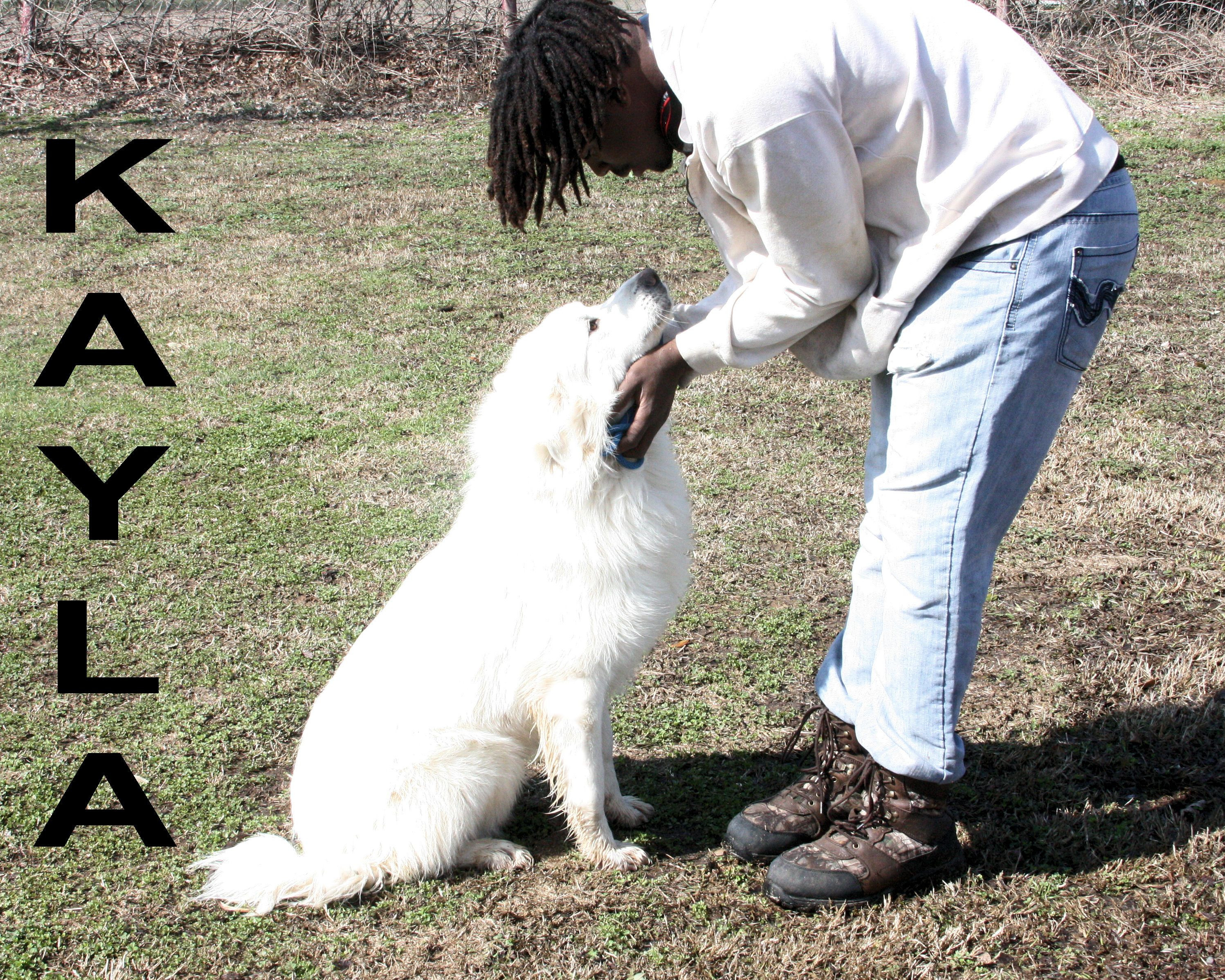 Great Pyrenees Dog For Adoption In Ada Ok Adn 811804 On