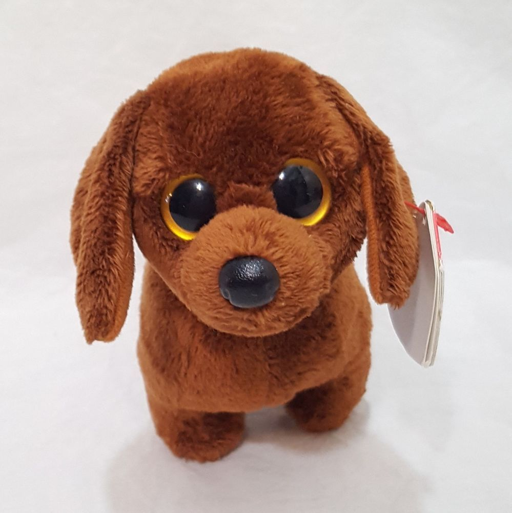 Cute Dachshund Dog Or Puppy With A Blue Collar With Yellow And