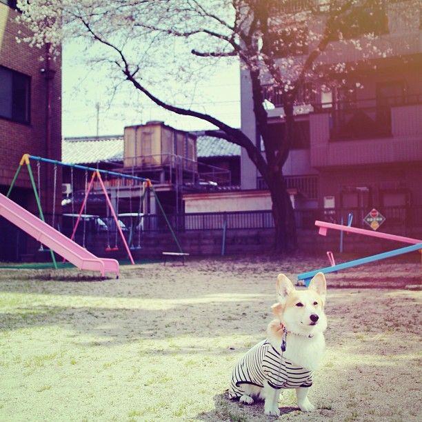 おつかれFriday。 #sakuradog2013