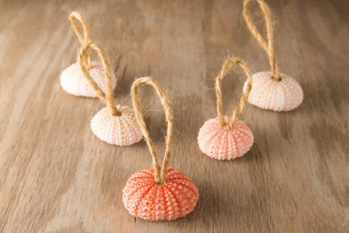 Hinterland Trading Christmas Pink Sea Urchin Ornaments Set of 5 Adorable Urchins for Year Round Decorating Hinterland Trading,http://www.amazon.com/dp/B00H29LOXY/ref=cm_sw_r_pi_dp_Cq3Osb020GX3FMHA