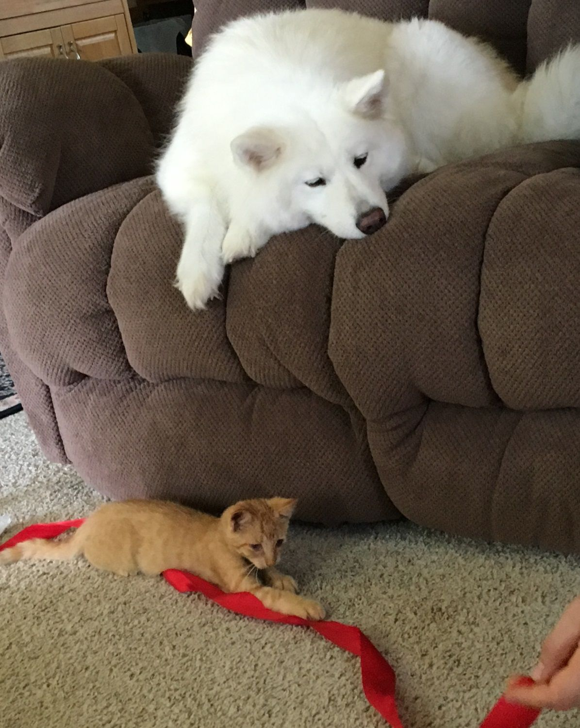 Pin by FlyDoda on Cat in 2020 Cute animals, Samoyed dogs