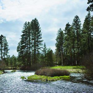 Escape to the Metolius River