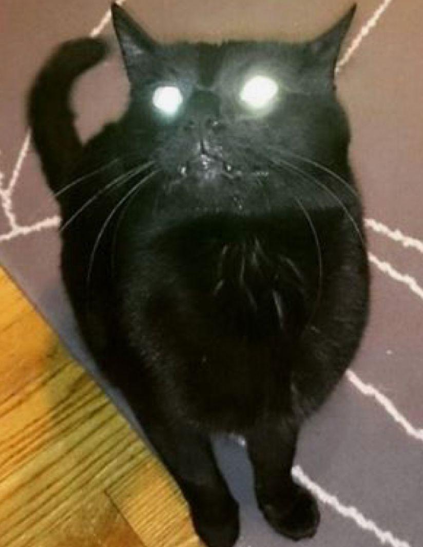Pin By Squidamolea On Scary Kitten Creepy Cat Scary Cat Cat Care