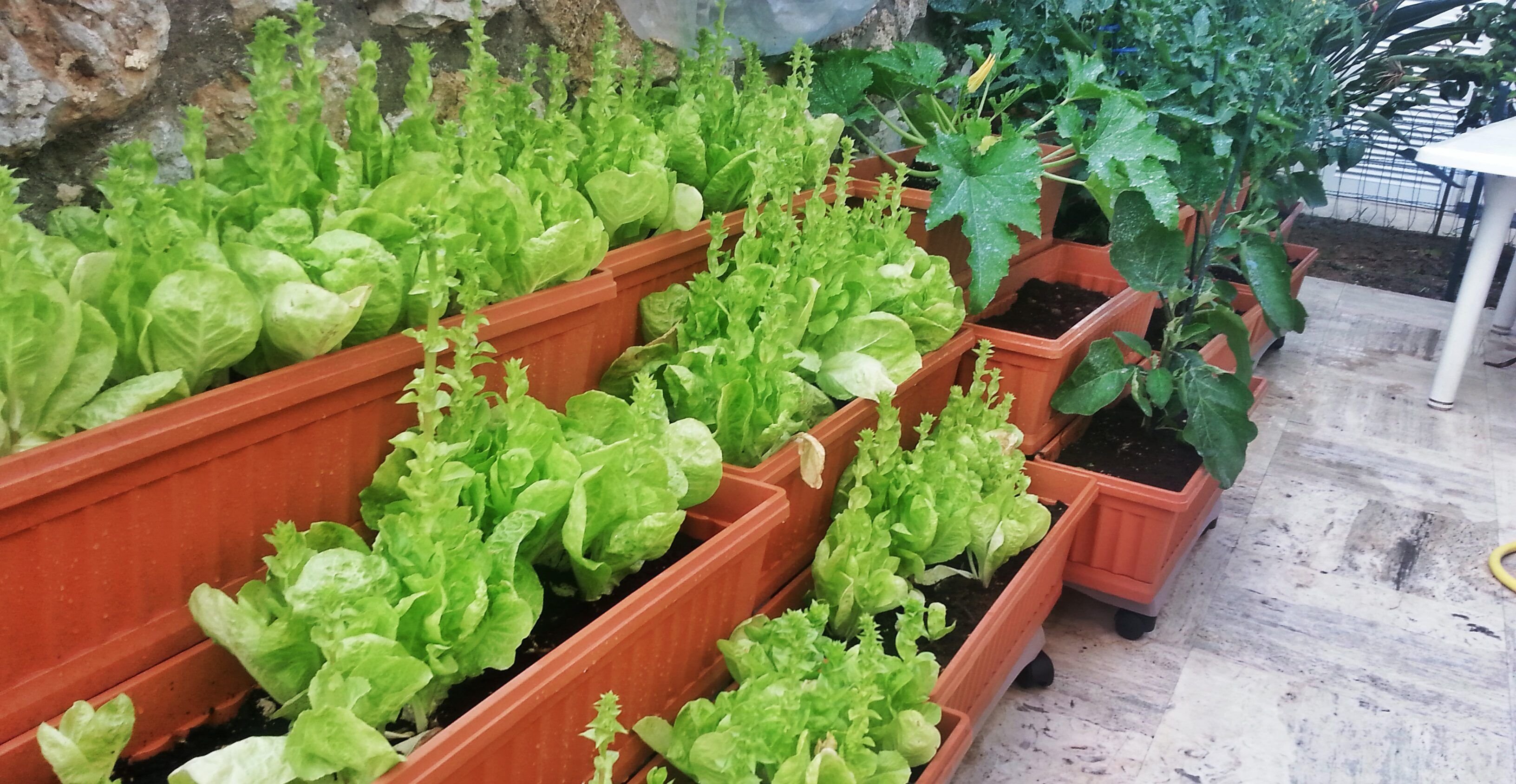 Orto sul balcone cosa piantare Orto in giardino, Orto e