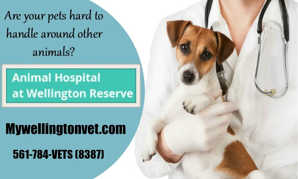 Pin by mywellingtonvet on Animal hospital Animal