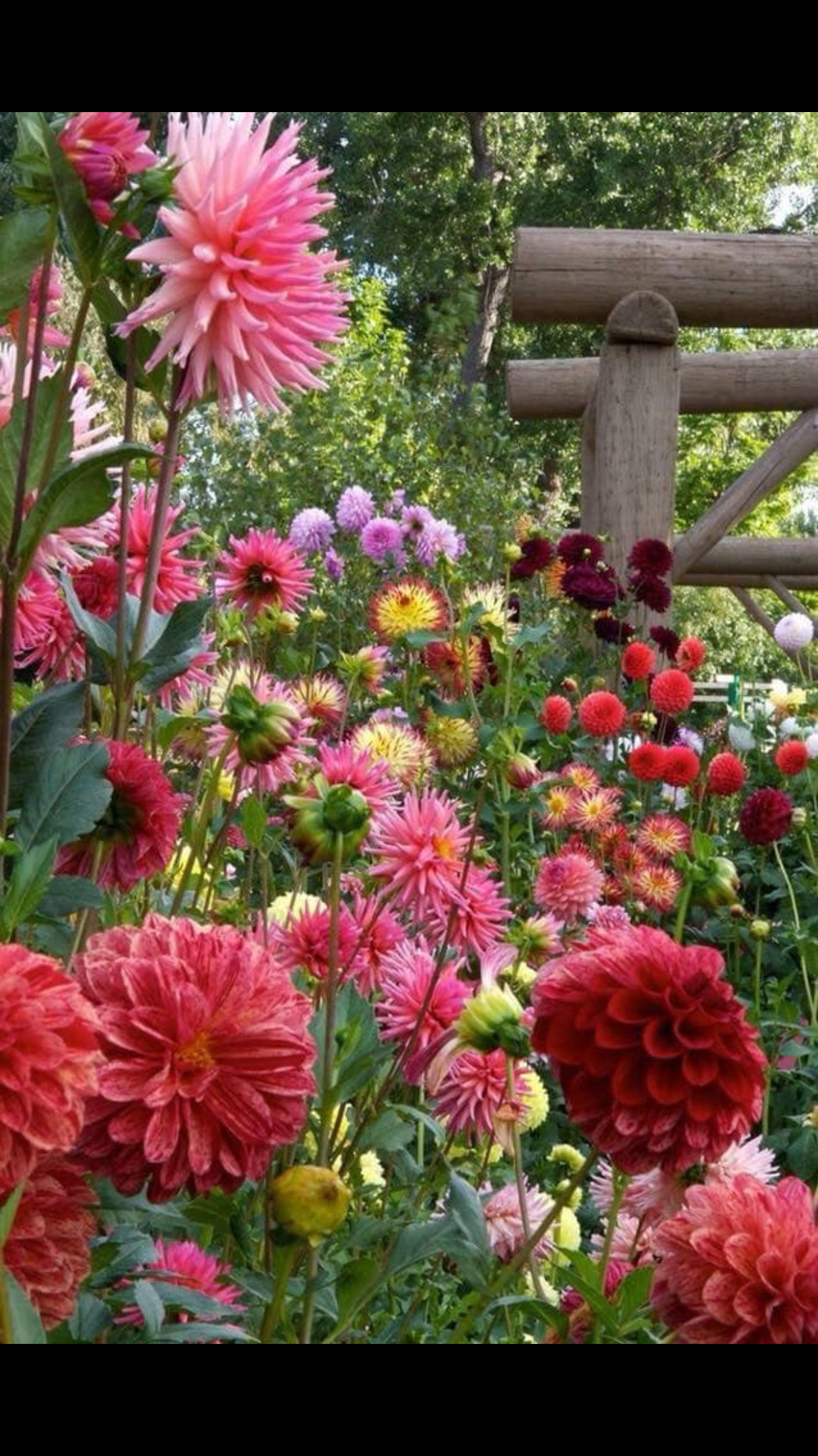 pin by pam stamper on wallpapers | garden, flowers, backyard
