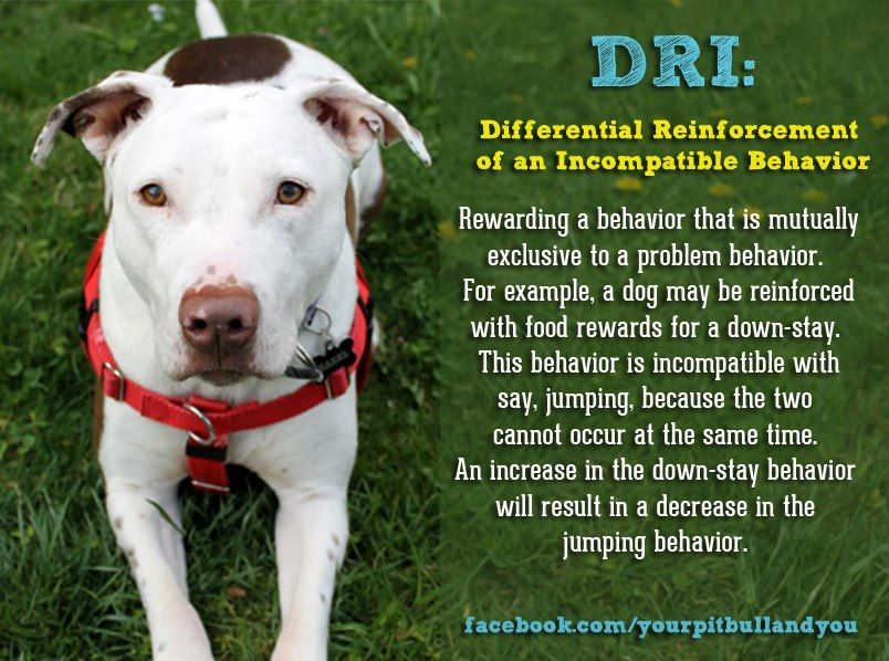 Dri Differential Reinforcement Of An Incompatible Behavior Dog