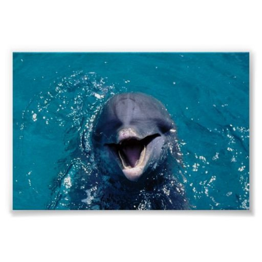 =>quality product          Happy Dolphin Print           Happy Dolphin Print In our offer link above you will seeReview          Happy Dolphin Print today easy to Shops & Purchase Online - transferred directly secure and trusted checkout...Cleck Hot Deals >>> http://www.zazzle.com/happy_dolphin_print-228722319383304248?rf=238627982471231924&zbar=1&tc=terrest