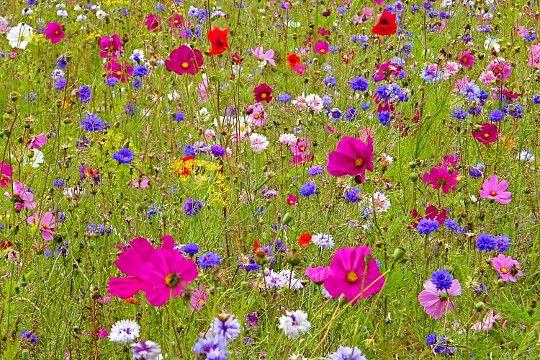 A4 Traduction A Suresnes Ile De France Summer Flowers Wild Flowers Plants