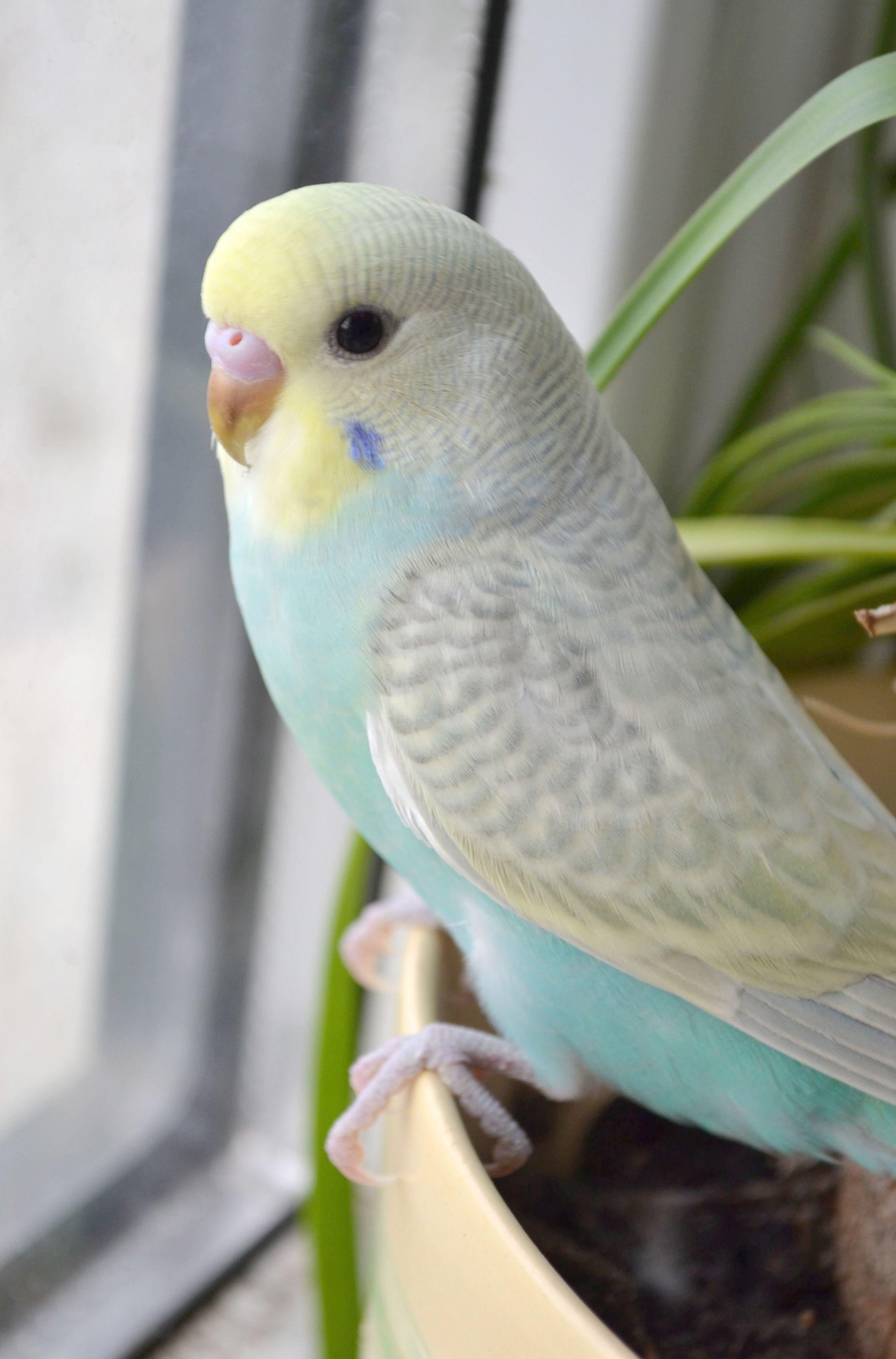 Look What I Found Petsmart Coupons Nice Best Pet Birds Budgies Bird Pet Birds