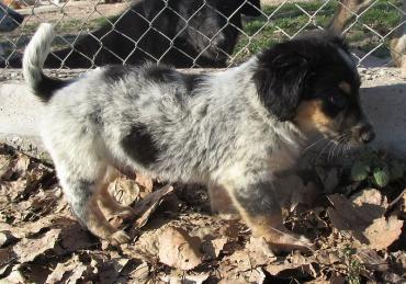 Hund, Mischling (Mischling, Rüde, 6 Monate) in Regebsburg
