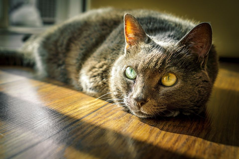 The meaning of the cat name Heidi