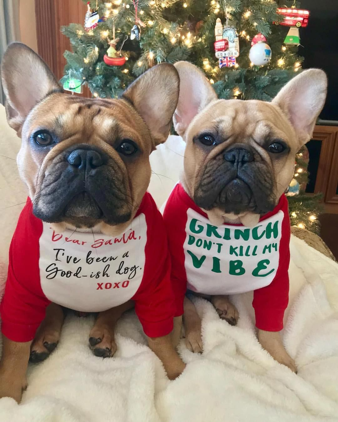 Find out additional info on frenchies. Take a look at our