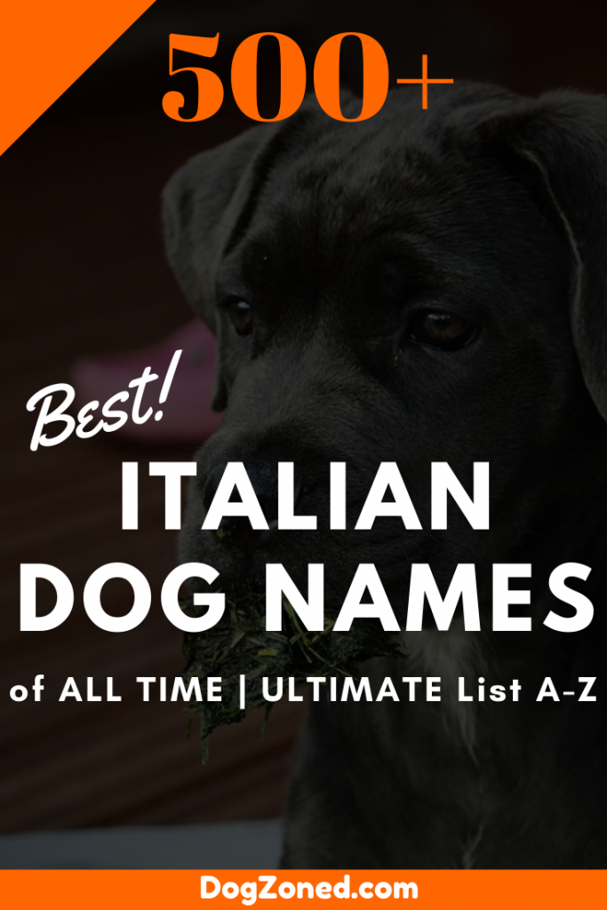 Best Male And Female Italian Dog Names Of All Time Ultimate List A Z Dog Names Italian Dogs Dog Names Male