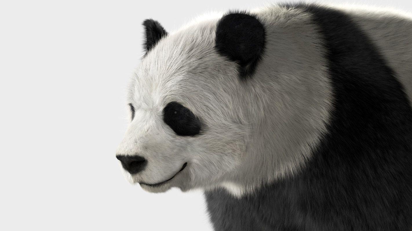 panda shave fur model