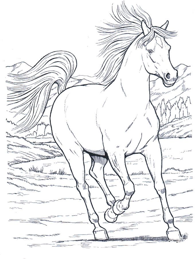 horses_8 Adult coloring pages | Caballos | Pinterest | Caballos ...