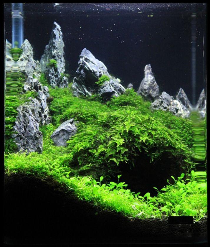 Creepy Cave   Aquarium landscape, Planted aquarium, Aquascape