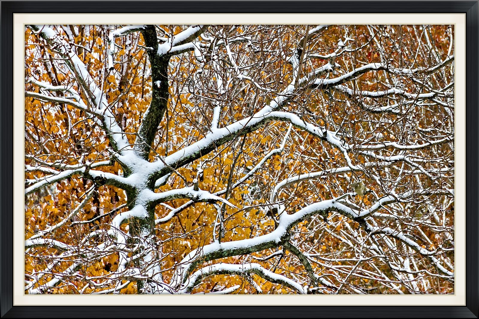 https://flic.kr/p/pNY9yD | Winter in Autum | Early snow and a late Autumn got together to make a magical image.