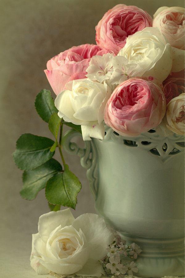 Fate of last blossom by Sonata Žemgulienė - Photo 199801623 / 500px