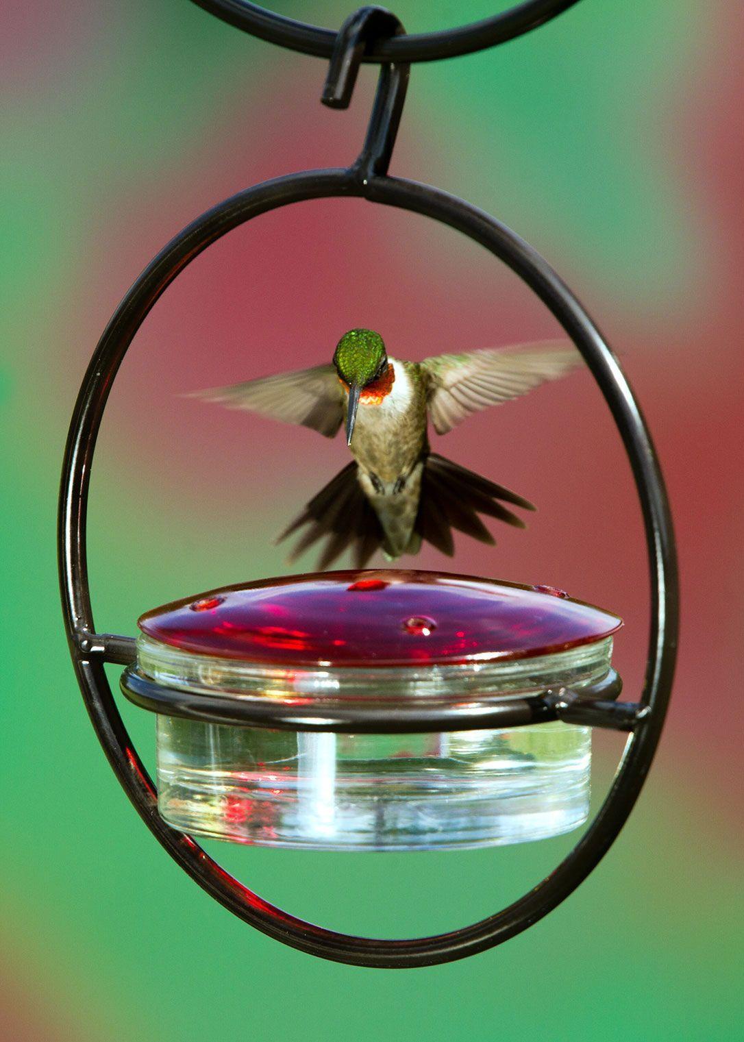Hummingbird Feeder Rodale's Humming bird feeders