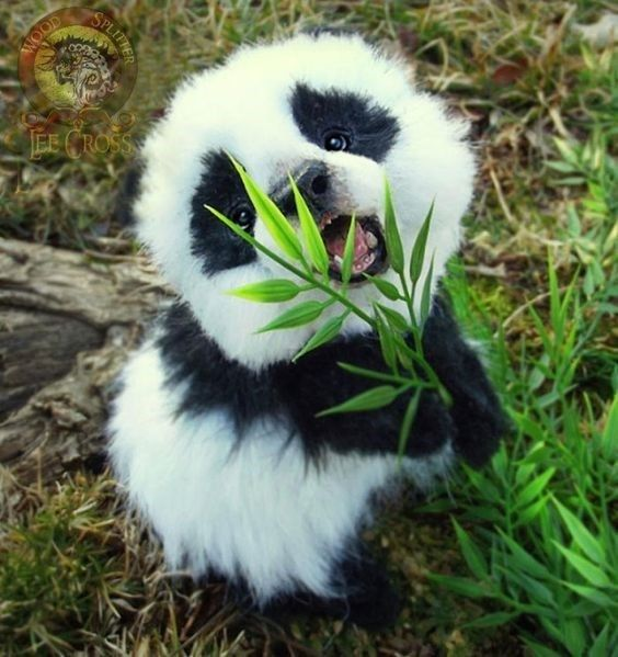 20 Adorable Animals That Will Make Your Day Brighter | CutesyPooh