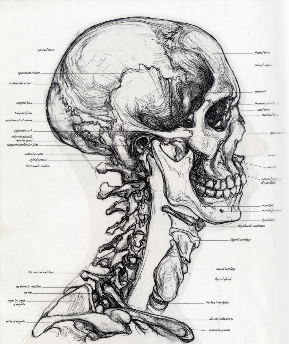 Fuck Yeah Medical Diagrams — Submitted by stramsey. | Human Anatomy ...