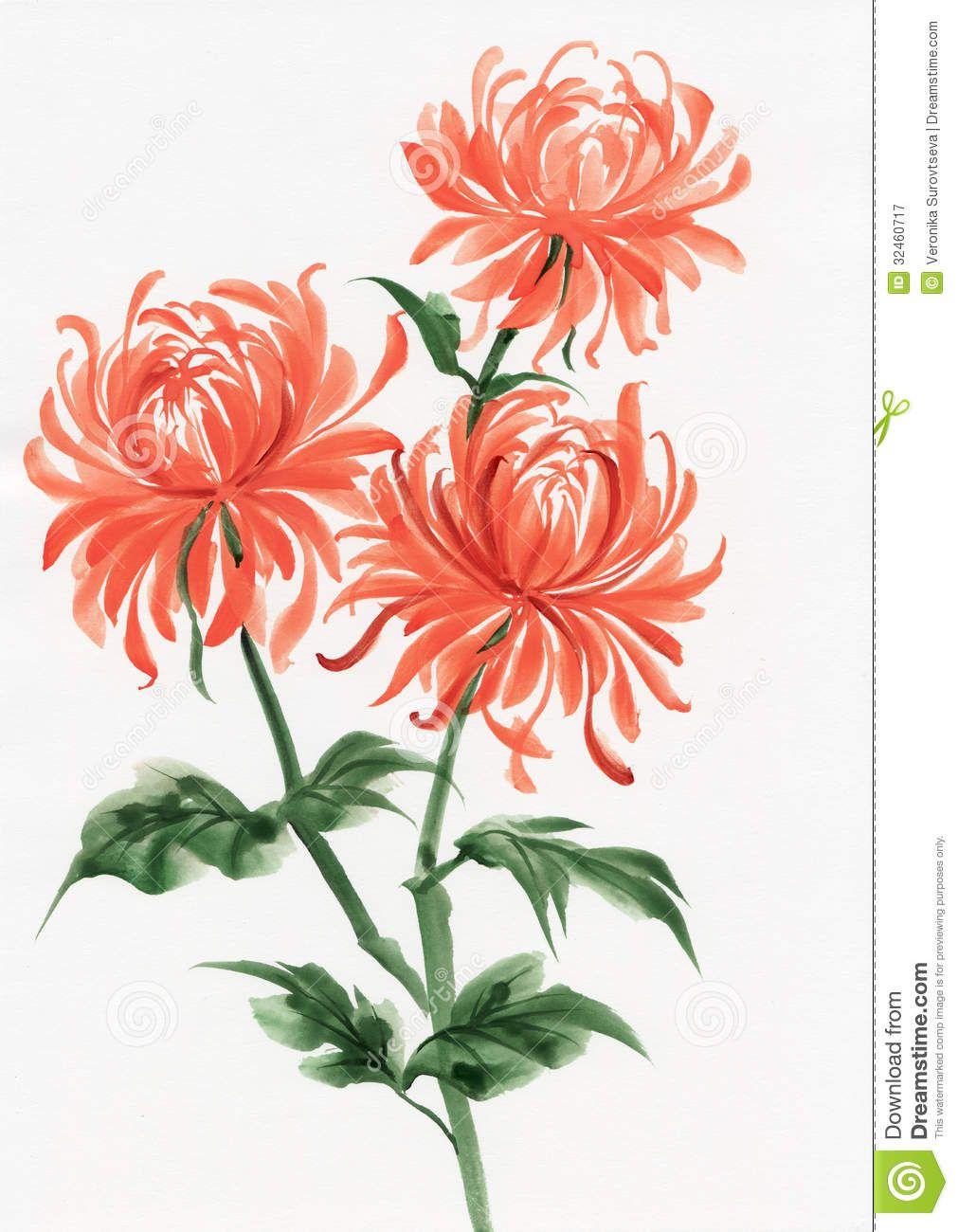 Orange Chrysanthemum Flower Drawing Flower Painting Chrysanthemum Watercolor
