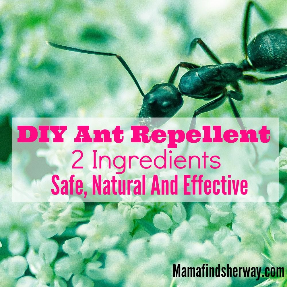 how to get rid of ant hills in garden