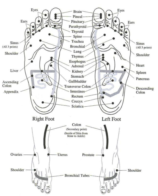 Vita flex foot chart the oil essentials how tos of young living essential oils also rh pinterest