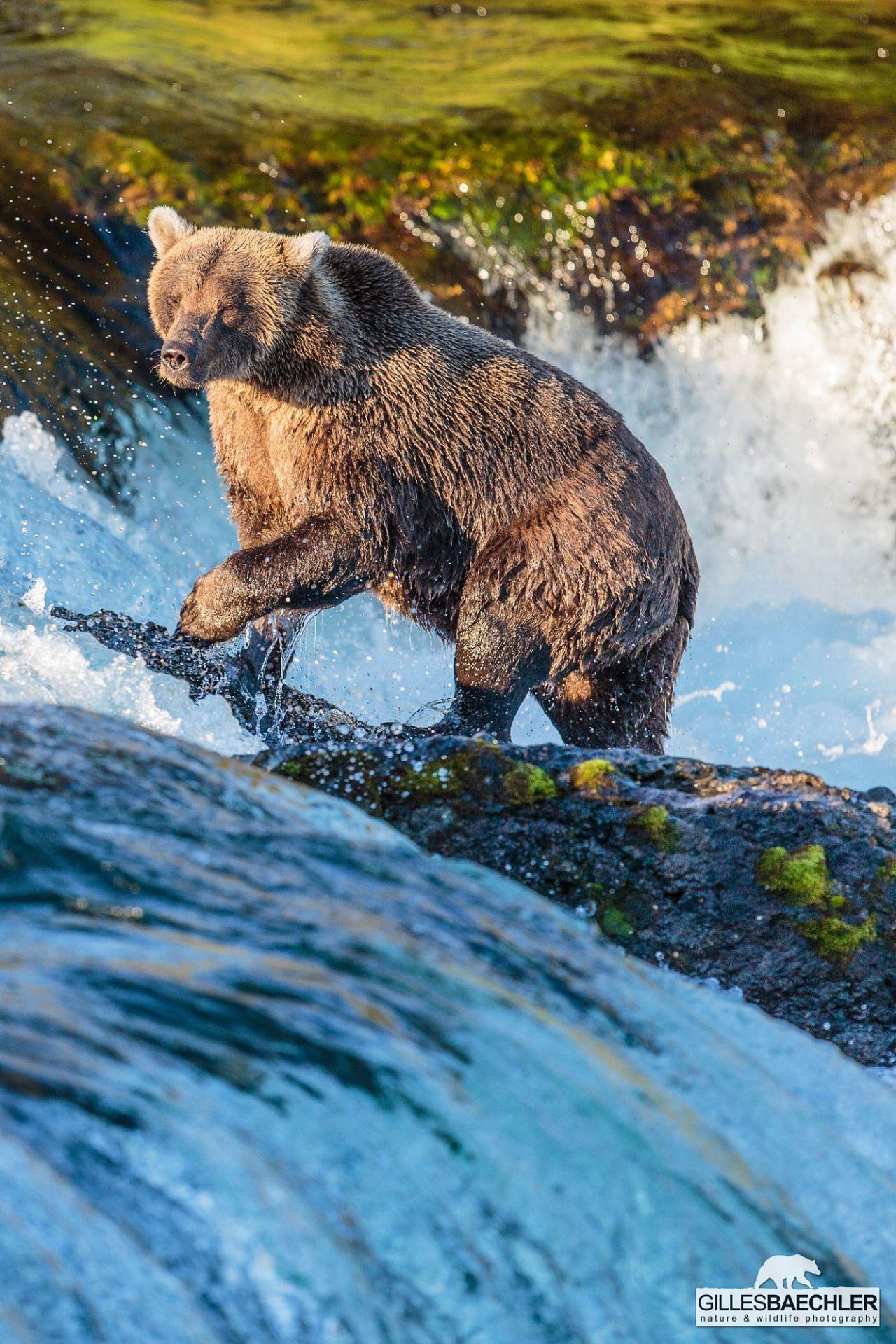 naturenode  tiere malvorlagen born to be wild