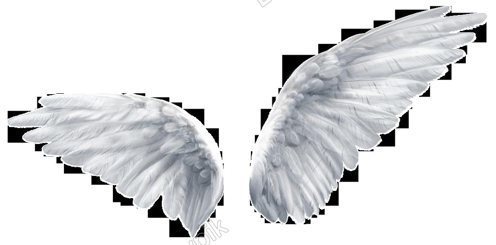 Pintado A Mano De Un Par De Alas Png Transparente Alas De Angel Png Fotos De Alas De Angel Tatuajes De Alas De Angel