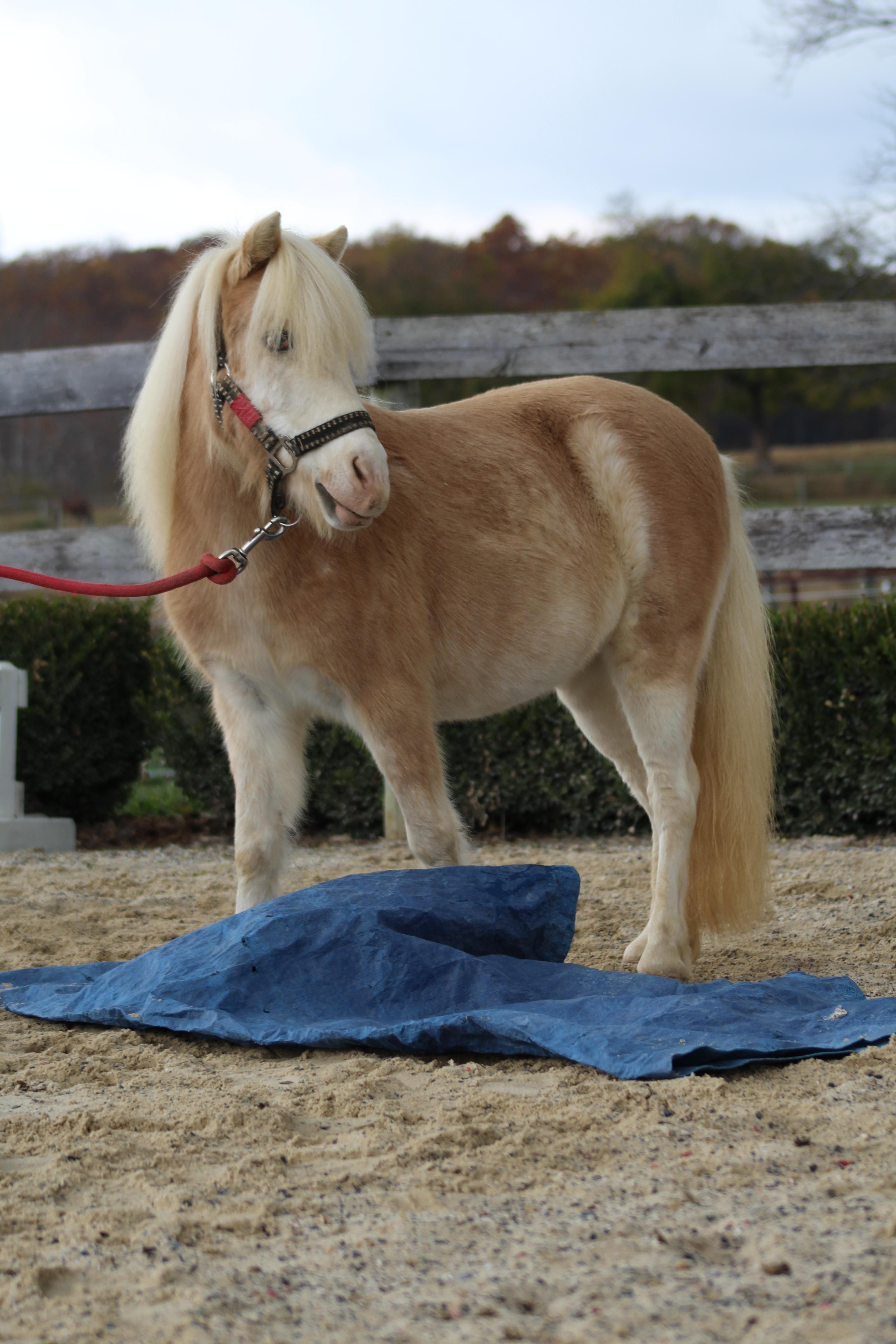 Adopt Yana on | Petfinder | Horse rescue, Horses, Horse farms
