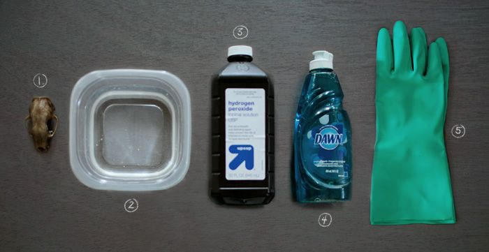 5 Simple Steps for Processing and Cleaning Bones. Supplies for Cleaning: 1// Dead specimen 2// Plastic container 3// Hydrogen peroxide 4// Dish soap 5// Gloves.