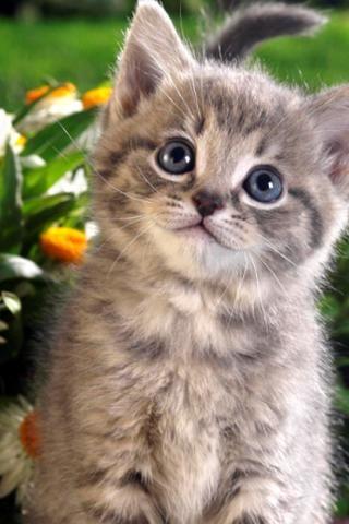 Cute Animal Wallpaper 5 Screenshot 0