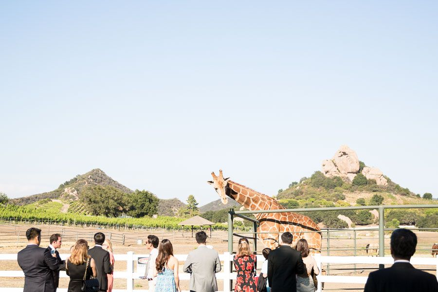 Malibu Wine Safari Wedding Venue Saruphotography Www Saruphoto