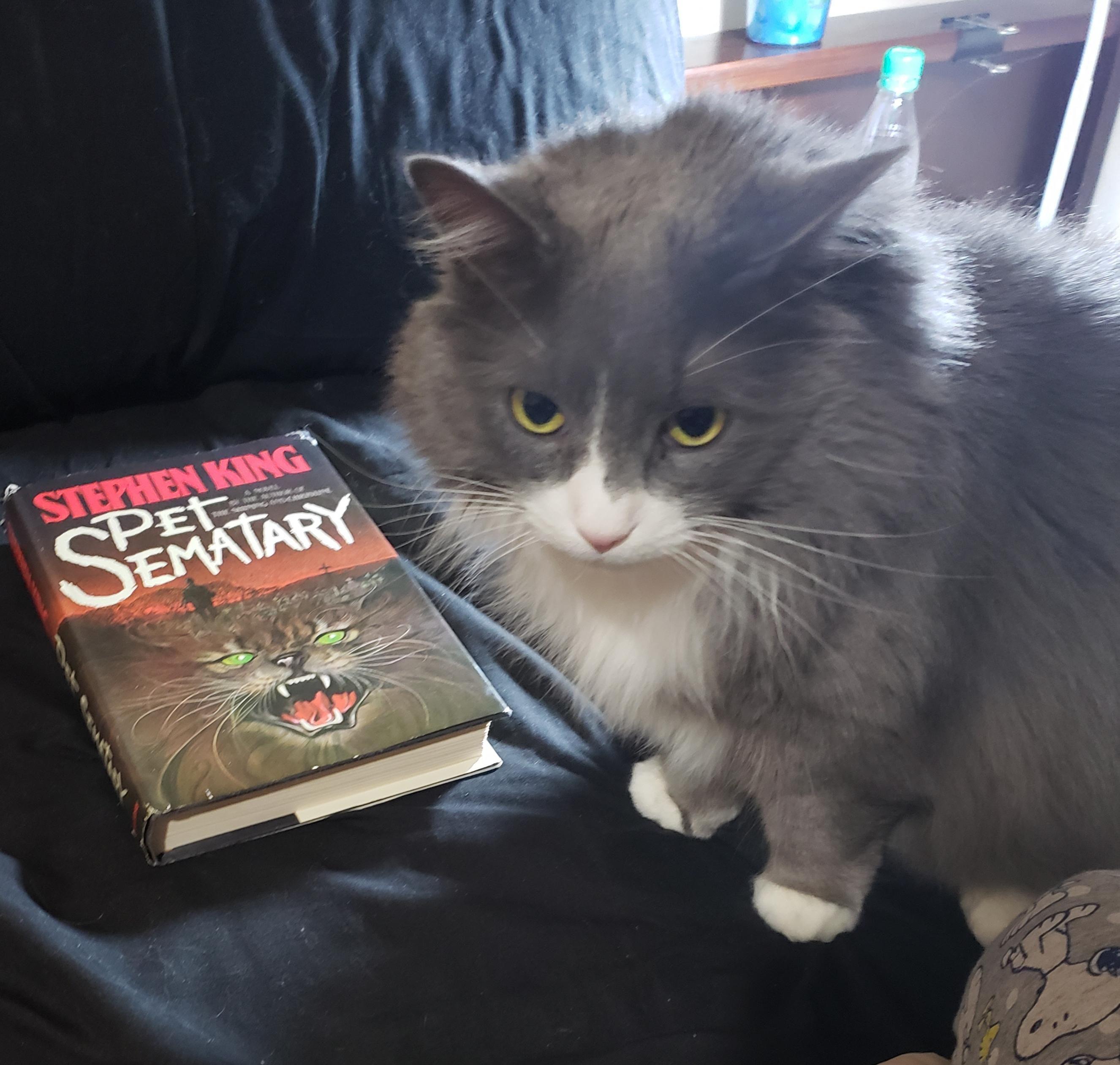 Steve Is Questioning My Taste In Literature Bones Funny