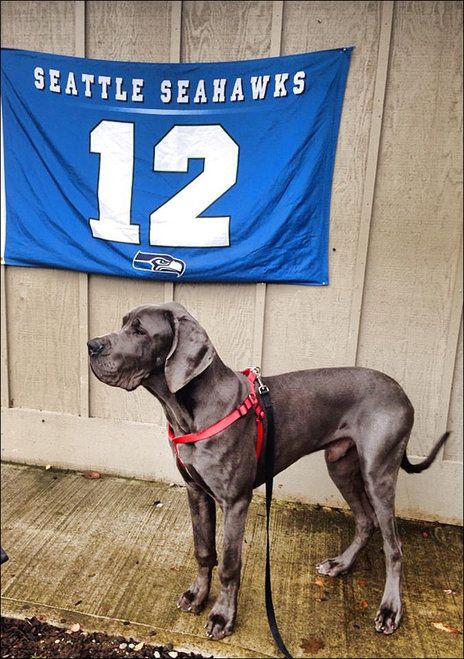 12th Pet Pride Pets Seattle Seahawks