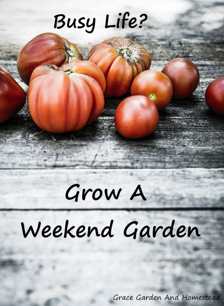 Always wanted a garden, but don't have the time? You need to a weekend garden. Here are the do's and don'ts to the low maintenance garden.