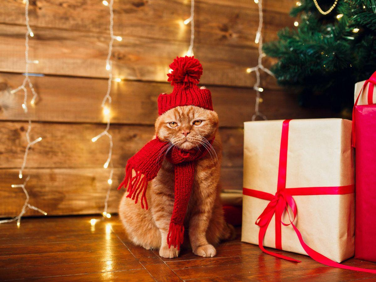 Trader Joe S Knows Your Cat Wants Its Own Advent Calendar Holiday Fragrance Dog Advent Calendar Cat Advent Calendar
