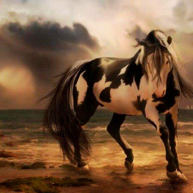 Paint Horse Art Work Love This Horses Horse Wallpaper Free Horses