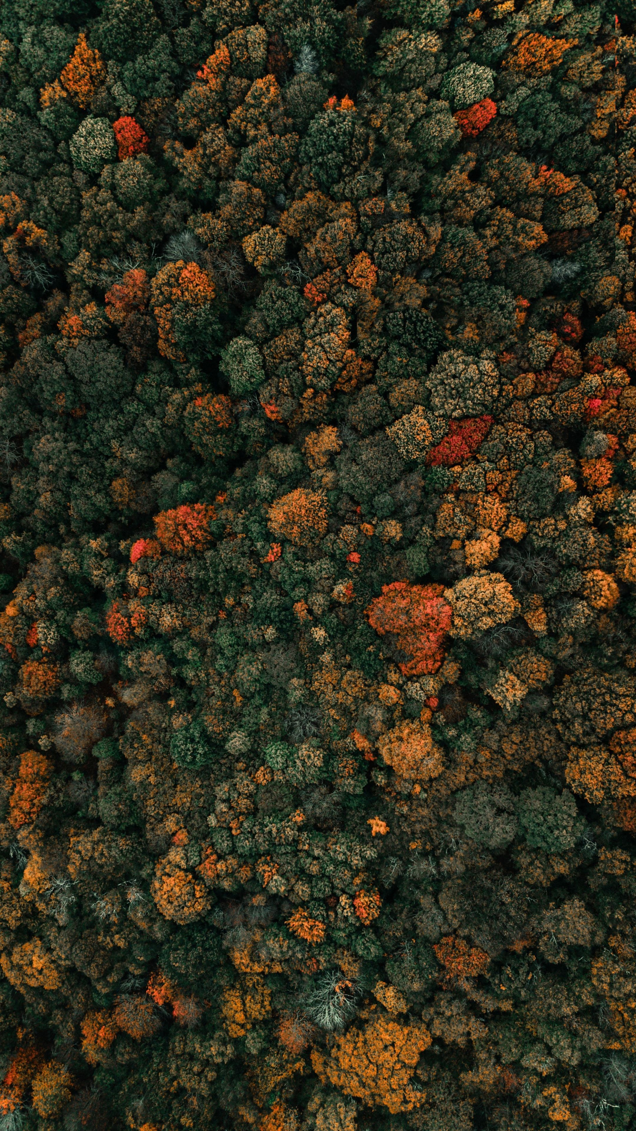 2160x3840 Colored Trees Fall Autumn Nature Aerial View Wallpaper Aerial Photography People View Wallpaper Aerial Photography Drone