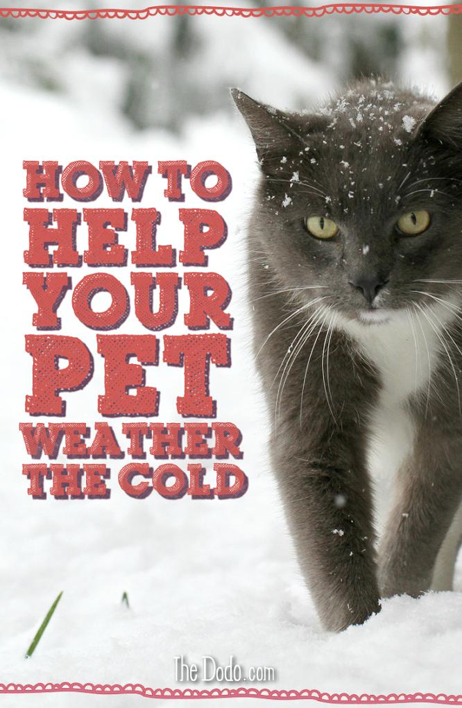39 Best Cold Weather Pet Safety Ideas Pet Safety Pets Pet Care