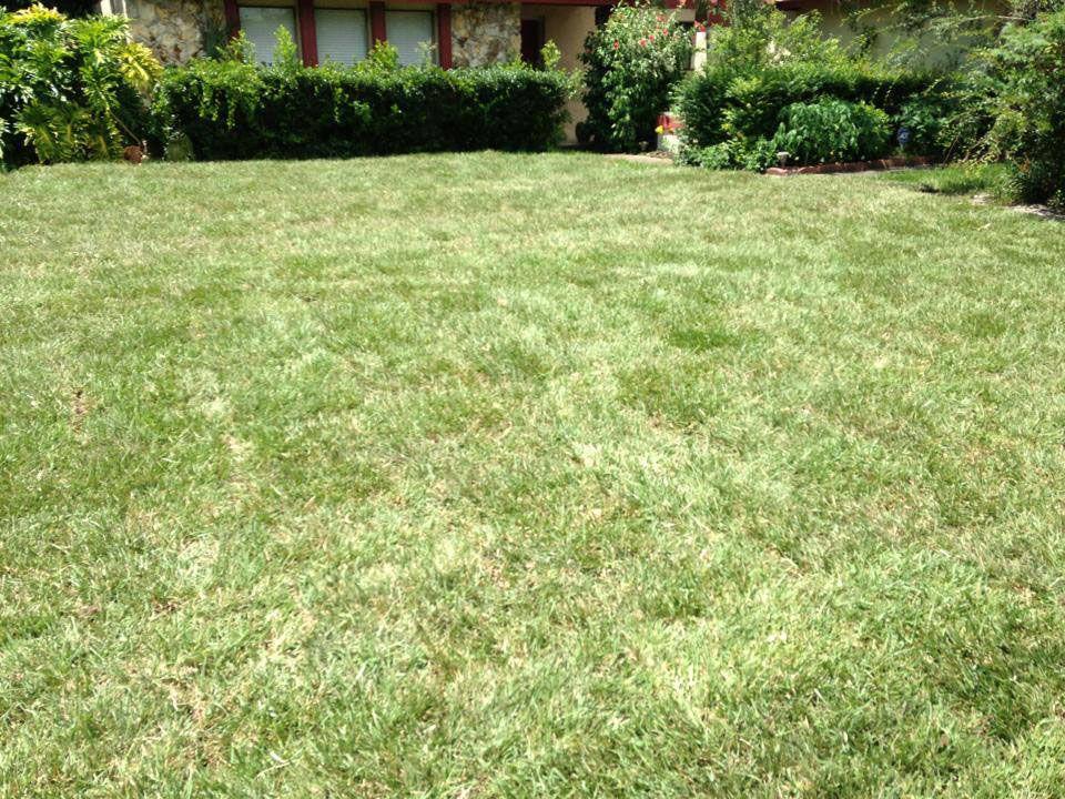 Floratam St. Augustine Grass Orlando, Fl sod grass