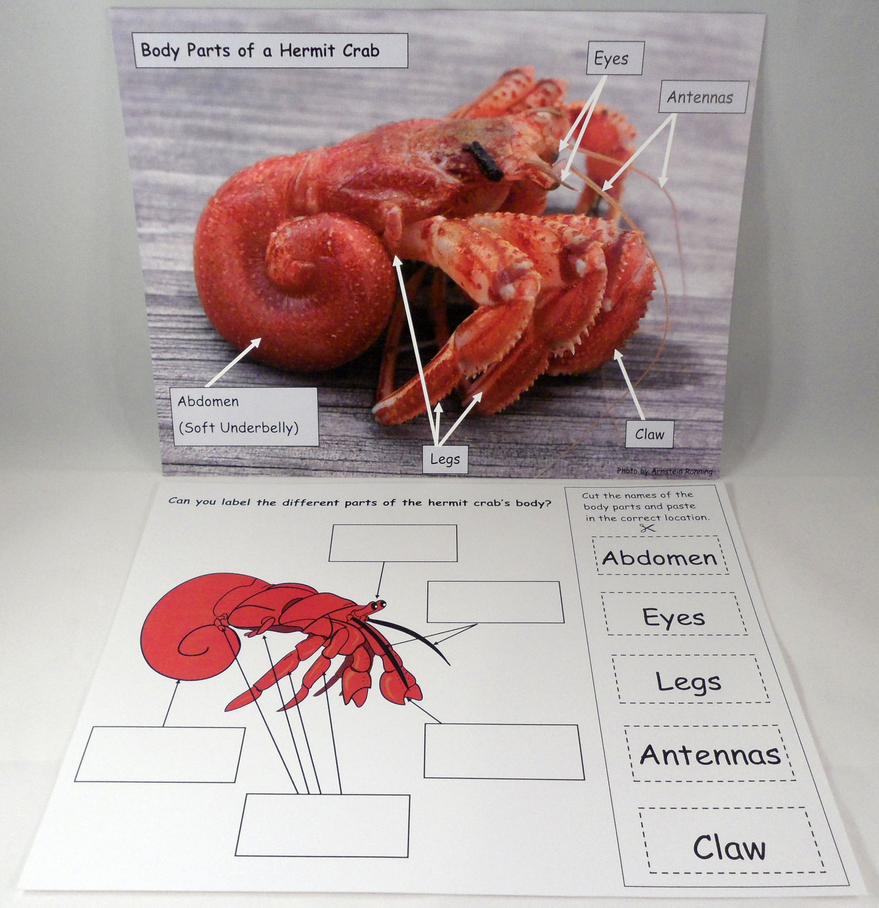 Hermit Crab Body Parts | A House for Hermit Crab by Eric Carle - Ivy ...