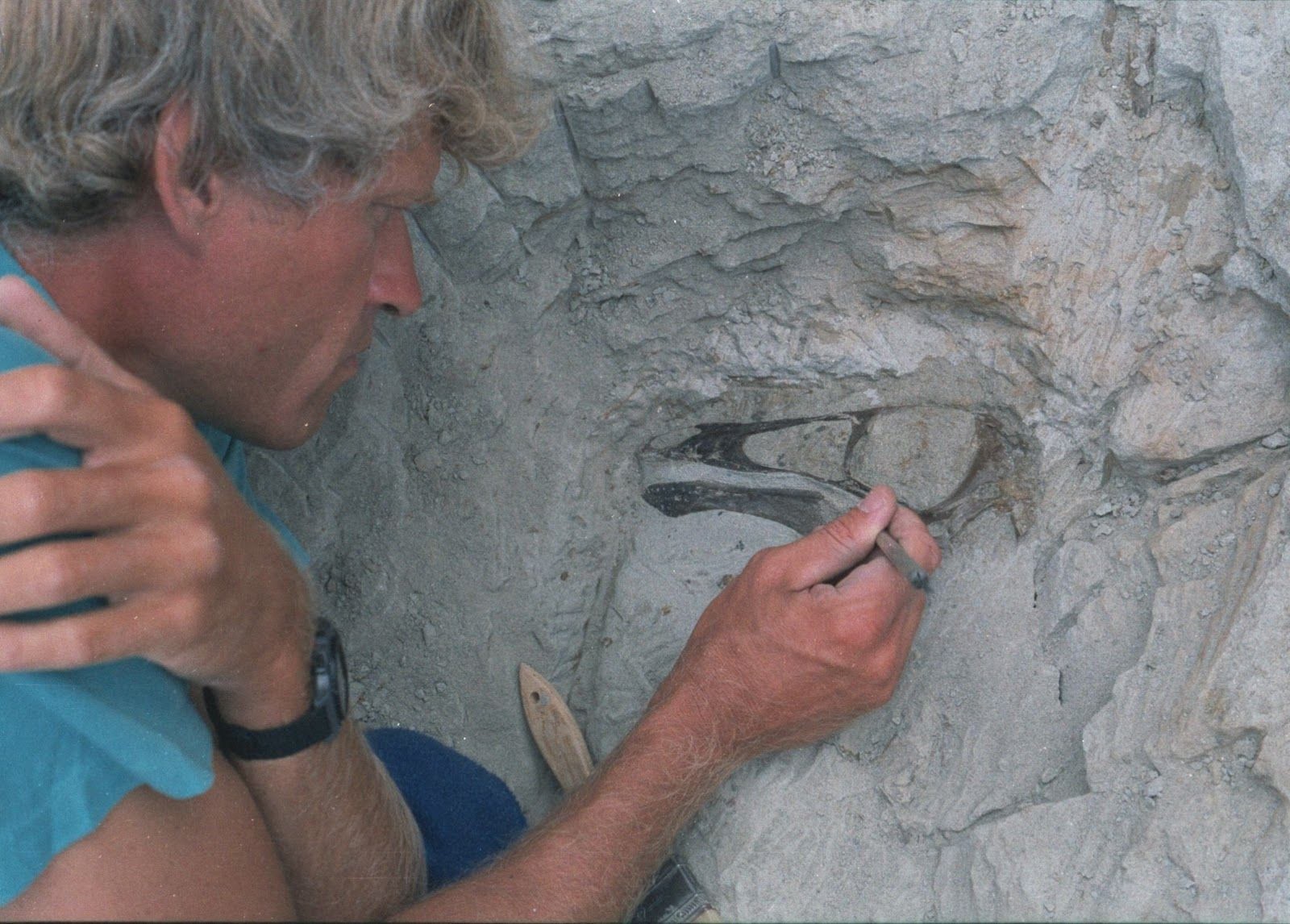 Dr. Philip J. Currie - Palaeontologist extraordinaire - excavating an Ornithomimid skull in Dinosaur Provincial Park.