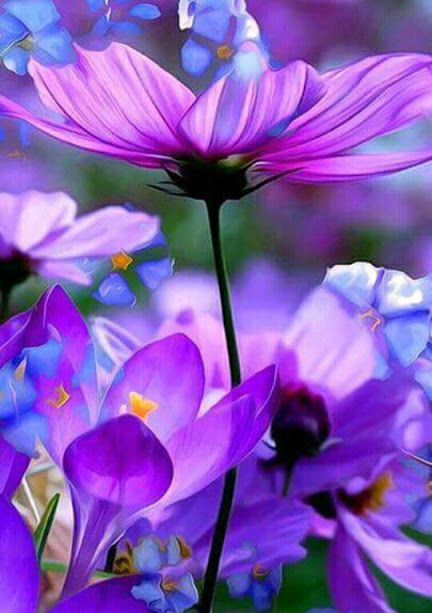 Pin by on pinterest flowers life is short break the rules forgive quickly kiss slowly laugh uncontrollably and never regret anything that makes you smile mightylinksfo
