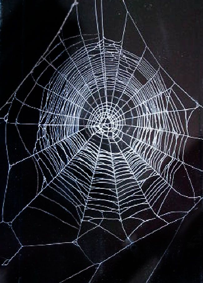 Beautiful Spiders Beautiful Spider Web How To Collect Spider
