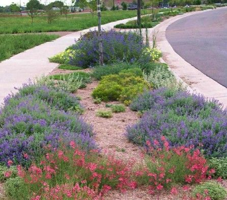 Garden Ideas Colorado gardens on spring creek xeric parkway strip -- water conservation